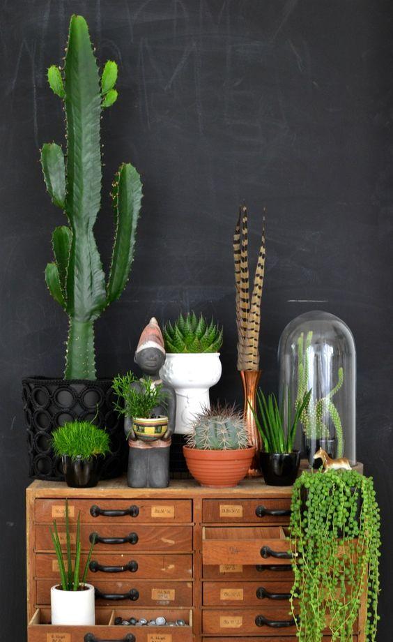 Angoli green: le piante in casa